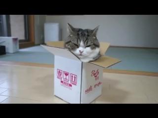 Кот Мару - король коробок!