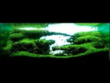 Wonderful aquariums, aquascapes from all over the world IAPLC 2007-2014