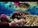 Массовый секс кораллов виден из космоса
