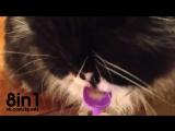 Странная смешная реакция кота на мороженое / A cat freezes the brain and bug after eating ice cream