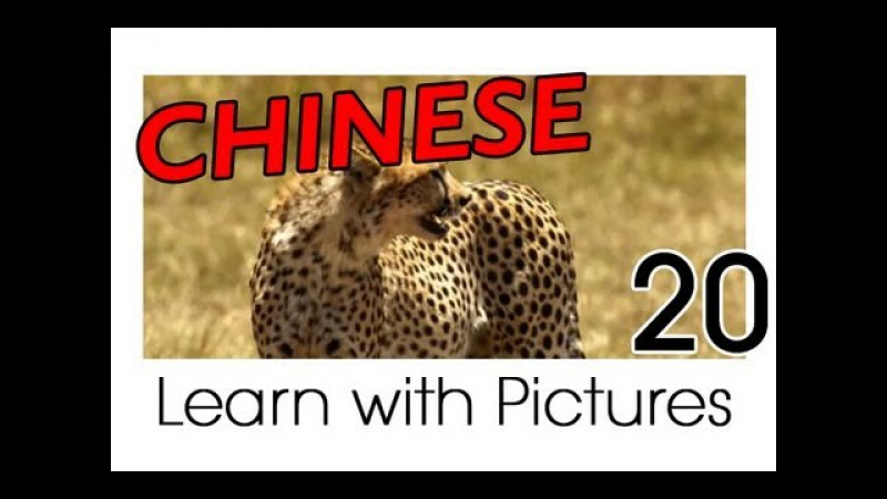 Learn Chinese With Pictures Safari Animals
