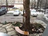 Московский дворик 2012год