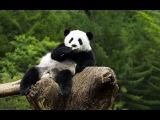 Панда научит: как монтировать видео