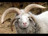 Видео самых смешных приколов про животных на ютуб онлайн. Смотрите бесплатно.