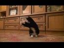 Говорящая кошка и мыльные пузыри