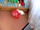 Шарик лопнул кролик испугался