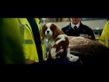 Ёлки 3: Собачье счастье