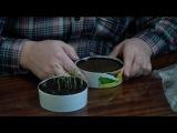 Стимулируем семена с помощью аэрированного компостного чая