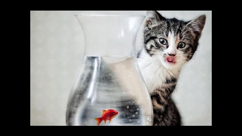 Funny Cats vs Fish Tank Compilation March 2015 [HD VIDEO]