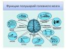 Детская кинезиология