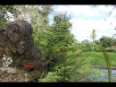 Dijual Tanah 7 1 Hektar dekat Hanging Garden UBUD Bali