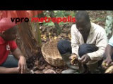 First taste of chocolate in Ivory Coast - vpro Metropolis
