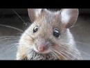 ТОП 10 Ужасные Спаривания Животных в сравнении с Человеком.mp4 [720p].mp4