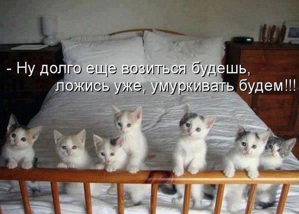 http://cs624423.vk.me/v624423716/43422/mz-fh_qin9E.jpg