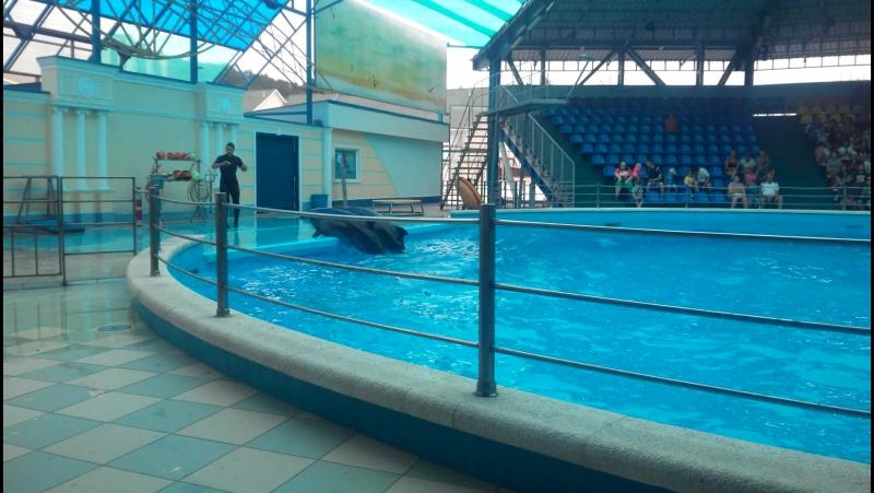 дельфинарий. п. Небуг