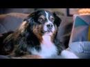 Пёс  Купидона  ♥