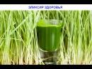 Эликсир здоровья( часть- 2) Сок из зеленой пшеницы