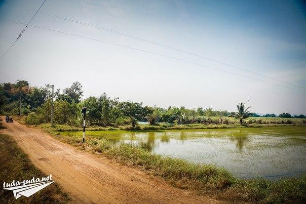 Рисовые поля Таиланд