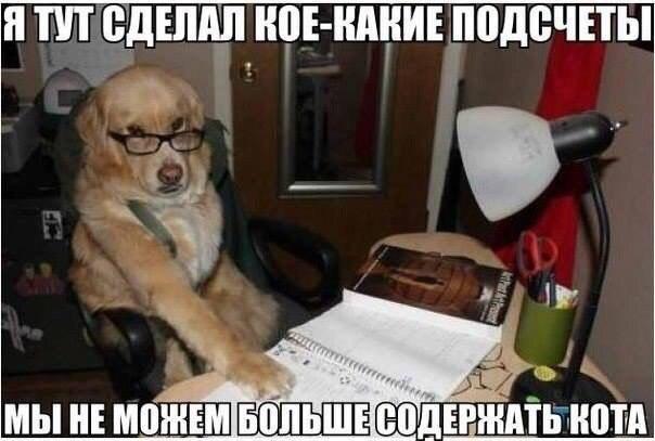 https://pp.vk.me/c624424/v624424509/256b0/uZioGsFlck0.jpg