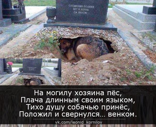 билета самолет пес хаски на могиле хозяина история пользователи хочу поделиться