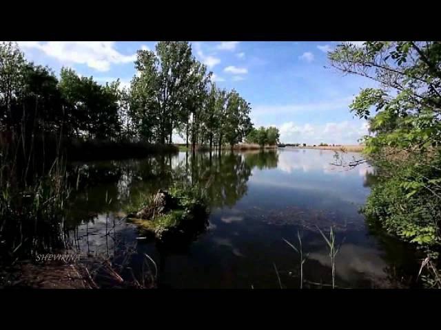 Stive Morgan - Bindweed Above The Water (Вьюн над водой)