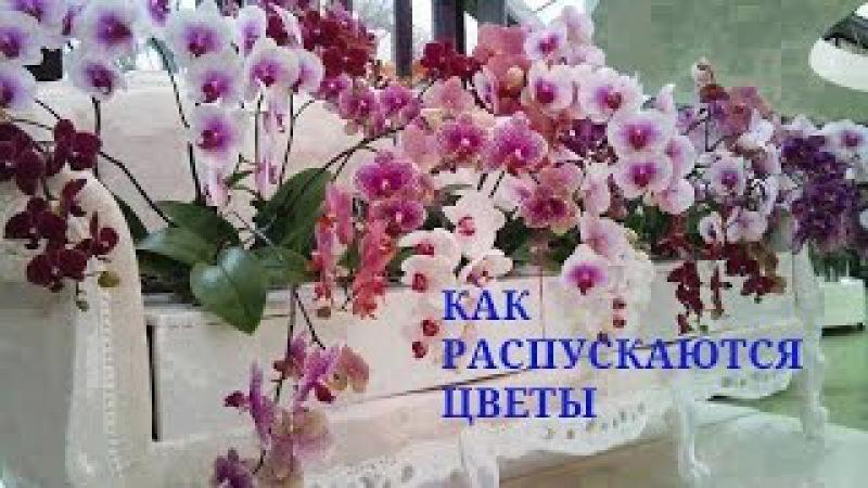 🌹Как РАСПУСКАЮТСЯ цветы Посмотри - это чудо!🌹