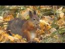 в осеннем лесу белка обедает
