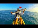 Kayak fishing Wahoo and tuna, Dania Beach,fl 1-12-14