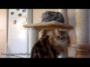 The fine sisters | Funny Cats