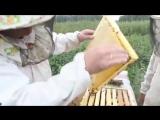 Как правильно качать мед Какие рамки выбрать для скачки меда
