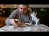 Как мой кот, просит кушать. Butch cat chooses sausage