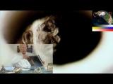 Сенсации -7522-2014- Нет еврейскому фашизму - Долой пархатый олигархат HD