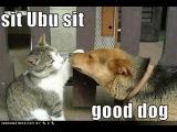 Самый смешной Собаки и кошки января 2015 [HD полный видео]