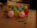 Anastasia - balloon popping dog, gets ready for the Guinness World record