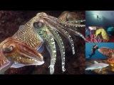 Reef Life of the Andaman (full marine biology documentary)