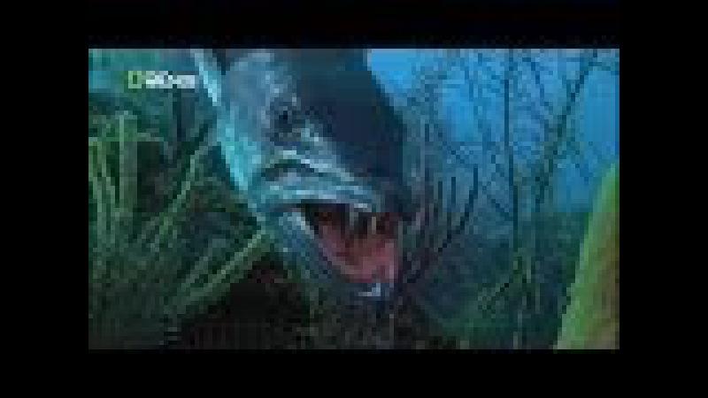 Самые опасные животные из морских глубин - Фильм документальный » Freewka.com - Смотреть онлайн в хорощем качестве