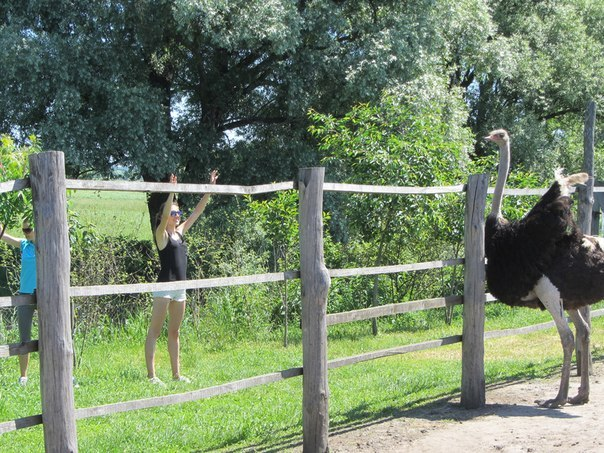 По семейному на страусиную ферму