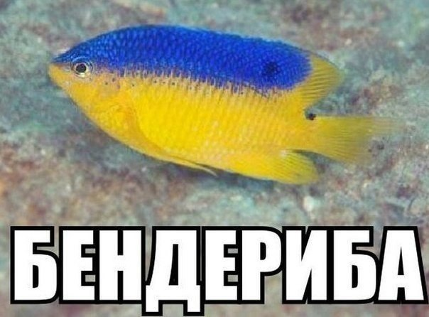 """В Конгрессе США намерены подготовить законопроект о предоставлении Украине """"большей поддержки на различных фронтах"""" - Цензор.НЕТ 8497"""