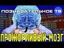 Прожорливый мозг (Познавательное ТВ, Сергей Савельев)