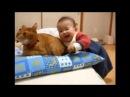 Приколы с котами, смешные и забавные (Funny Cats). Нарезка интересных видео про котов, часть 3