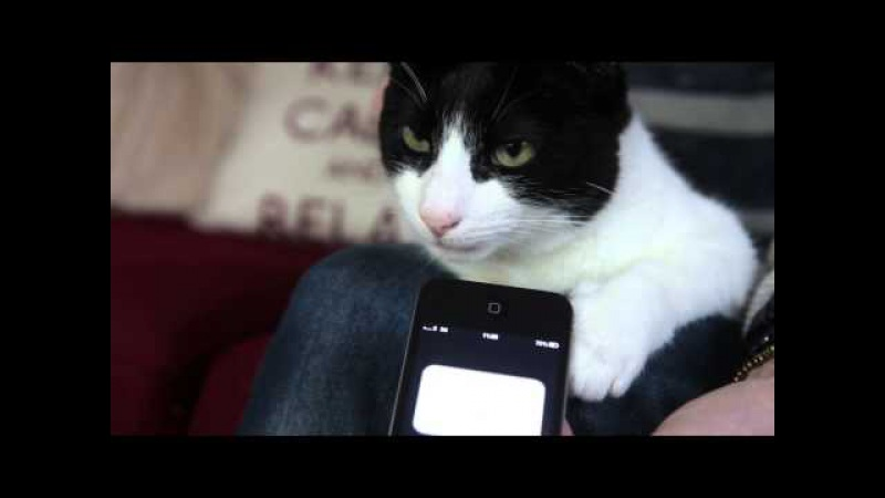 Merlin the cat with the loudest purr in the world