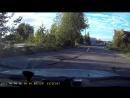 ШОК! Собака срёт по центру дороги