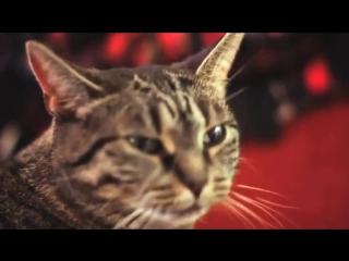 Мяукает в такт тяжелому року (Метал Хард) - очень музыкальный кот (Прикол) (Животные) (Кошка) (Музыка)