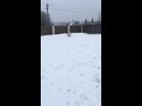 Зимние дачные забавы