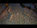 Предки фильм о петроглифах и археологии Заполярья