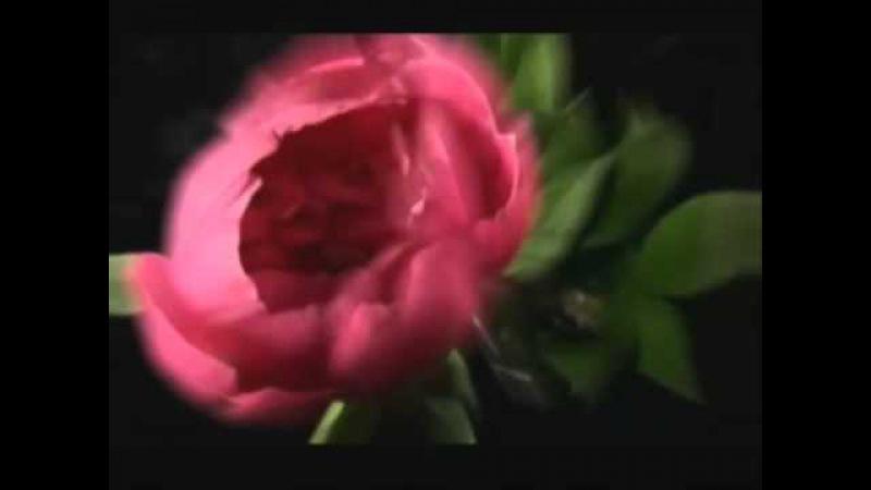 АЛБАНСКОЕ ТАНГО Песня 60х авт Ю Терещенко Исполнитель Валентина Сергеева avi