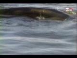 staroetv.su / Диалоги о рыбалке (РТР, 2000) Выпуск №15 (Ловля сома на квок)