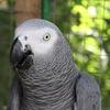 Контактный зоопарк Зов Джунглей Геленджик