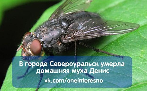 В Чечне убили депутата парламента республики - Цензор.НЕТ 2361