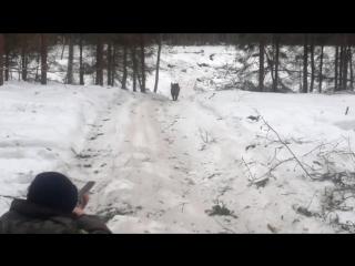 Охота на кабана - или кто куда. частное любительское видео. ужас а не охотники.